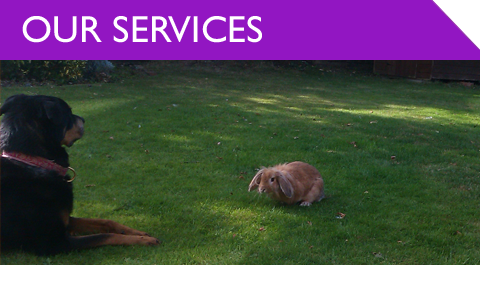 All Creatures Pet Care